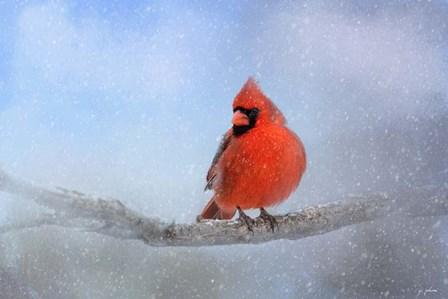 Cardinal In The Snow by Jai Johnson art print