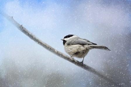 Chickadee In The Snow by Jai Johnson art print