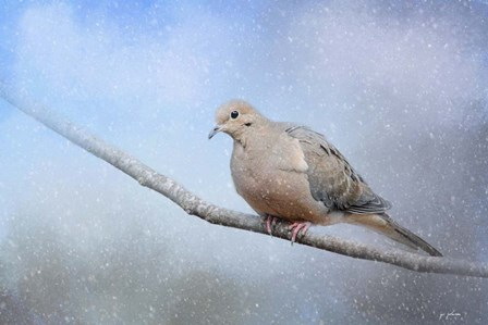Dove In The Snow by Jai Johnson art print