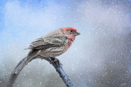 Finch In The Snow by Jai Johnson art print