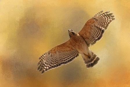 Raptors Afternoon Flight by Jai Johnson art print