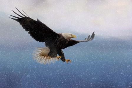 Snowy Flight Bald Eagle by Jai Johnson art print