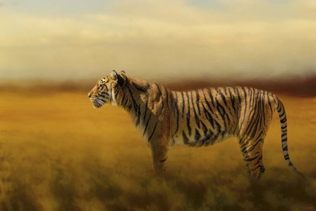 Tiger In The Golden Field by Jai Johnson art print