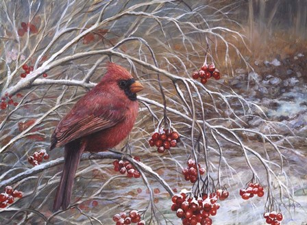Cardinal and Berries by Kevin Dodds art print
