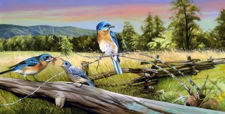 Bluebird Meadow by Spencer Williams art print