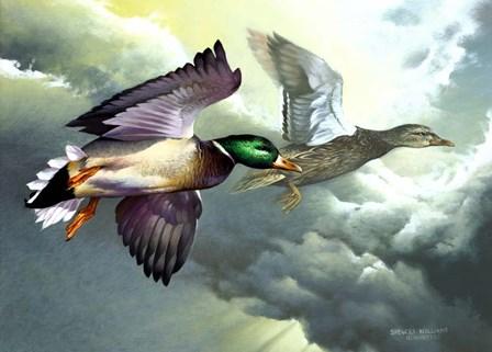 Mallards In Flight by Spencer Williams art print