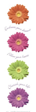 Gerbera Daisies by Anthony Matos art print