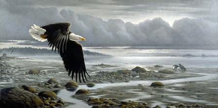 Lowtide - Bald Eagle by Wilhelm J. Goebel art print