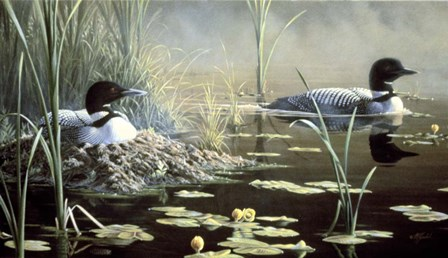 Nesting Loons by Wilhelm J. Goebel art print
