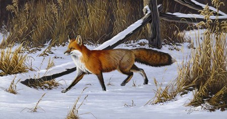 Fox Trot  - Red Fox by Wilhelm J. Goebel art print