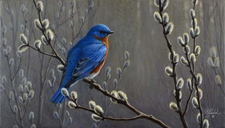 Signals Of Spring - Eastern Bluebird by Wilhelm J. Goebel art print