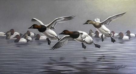 Canvasbacks Coming In by Wilhelm J. Goebel art print