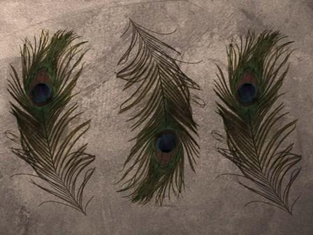 Peacock Feathers III by Natasha Wescoat art print
