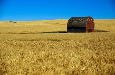Red barn in wheat field, Palouse region, Washington, USA. by Panoramic Images art print
