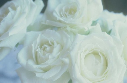 Flowers Roses by Panoramic Images art print