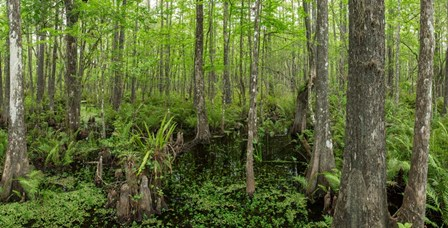 Six Mile Cypress Slough Preserve in Fort Myers, Florida by Panoramic Images art print