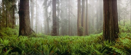 Vine Maple Trees, Mt Hood, Oregon by Panoramic Images art print