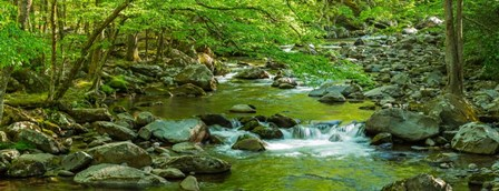Creek in Great Smoky Mountains National Park, Tennessee by Panoramic Images art print