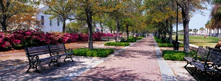 Waterfront Park in Charleston, SC by Panoramic Images art print