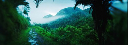Rainforest in Cayo District, Belize by Panoramic Images art print