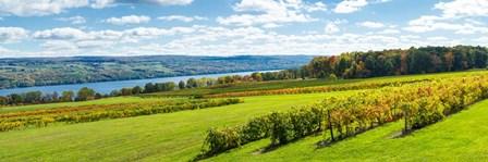 Glenora Vineyard, Seneca Lake, Finger Lakes, New York State by Panoramic Images art print