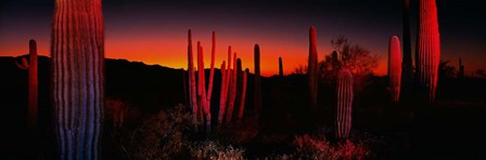 Organ Pipe National Park AZ by Panoramic Images art print