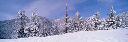 Snow Covered Landscape, Colorado by Panoramic Images art print