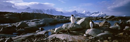 Penguins on Peterman Island by Panoramic Images art print