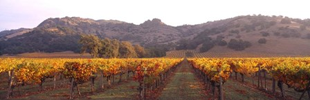 Stag's Leap Wine Cellars, Napa Valley, CA by Panoramic Images art print