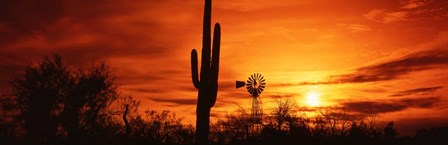 Sonoran Desert Sunset, Arizona by Panoramic Images art print