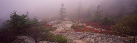 Cadillac Mountain, Acadia National Park, Maine by Panoramic Images art print