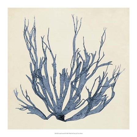 Coastal Seaweed I by Vision Studio art print