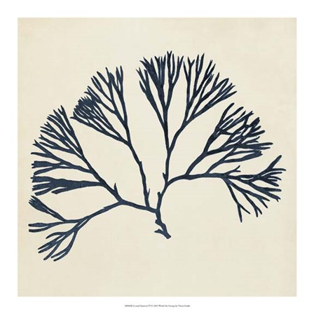 Coastal Seaweed VI by Vision Studio art print