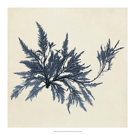Coastal Seaweed VII by Vision Studio art print