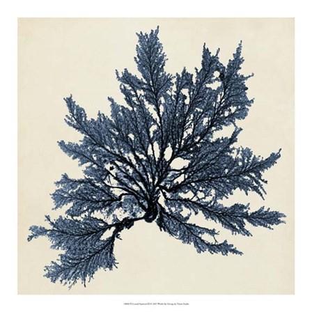 Coastal Seaweed IX by Vision Studio art print