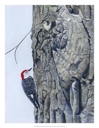 Red Bellied Woodpecker I by Fred Szatkowski art print