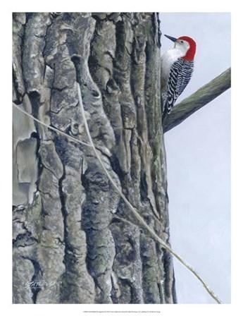Red Bellied Woodpecker II by Fred Szatkowski art print
