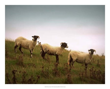 Wooly Friends I by Lillian Bell art print