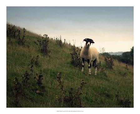 Wooly Friends II by Lillian Bell art print