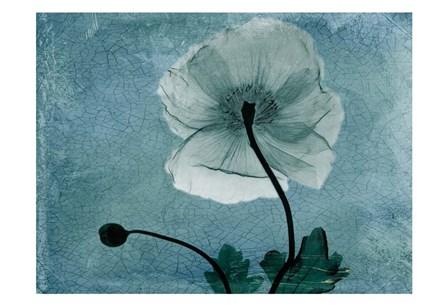 Iceland Poppy by Albert Koetsier art print