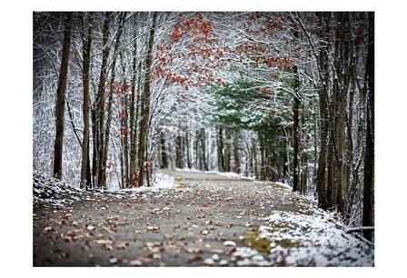Winter's Approach by Sandro De Carvalho art print
