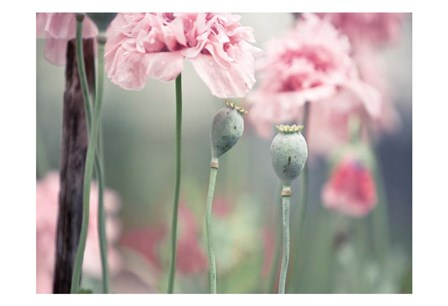 Poppy Pink by Tracey Telik art print