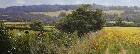 Poppies by Bill Makinson art print