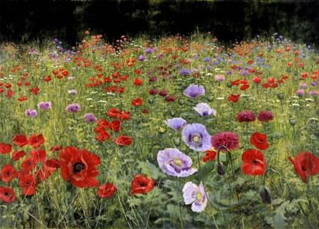 Field Of Poppies by Bill Makinson art print