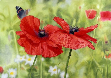 Poppies And Butterfly by Bill Makinson art print