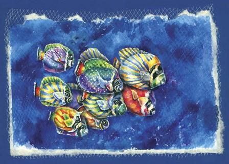 Fish In Net by Charlsie Kelly art print