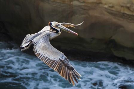 Pelican Flight by Chris Moyer art print