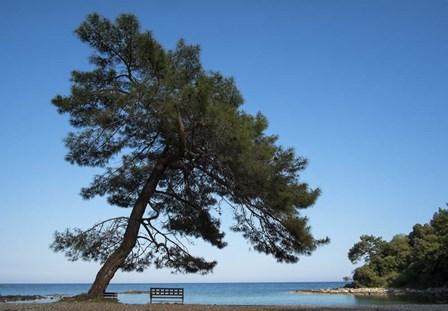 Tree At The Sea by Istvan Nagy art print