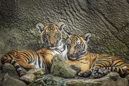 Brothers Twosome by Galloimages Online art print