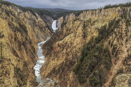 Yellowstone Grand Canyon - Lower Falls by Galloimages Online art print